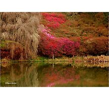 SPRING IS HERE - Magoebaskloof South Africa Photographic Print