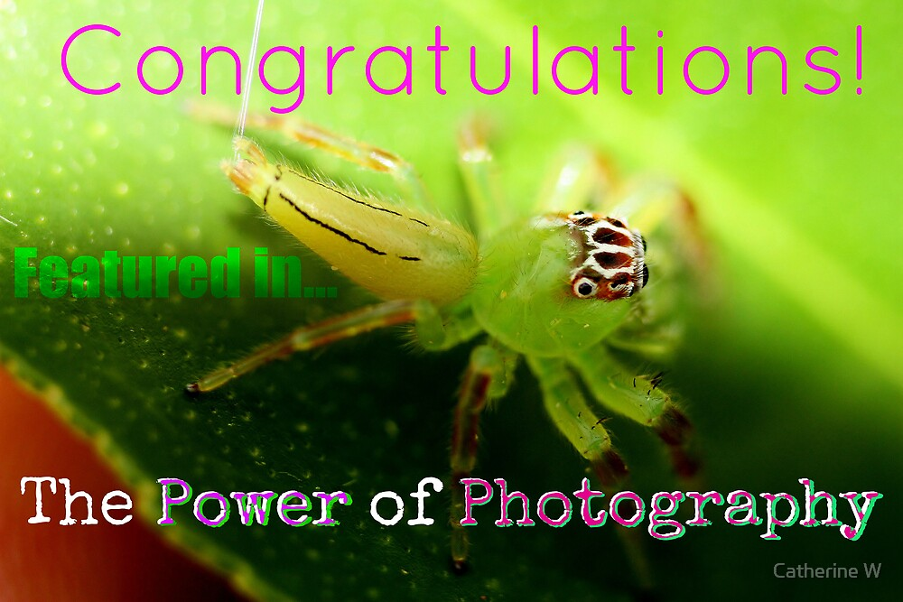 Featured Banner Power of Photography by cathywillett
