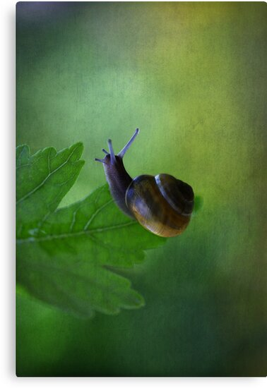 I am not so fast by AnnieSnel