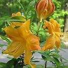 Orange Flower Bush by teresa731