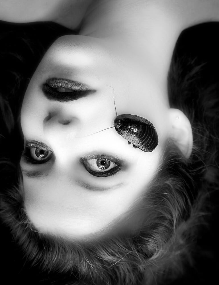 Teenage film noir by alan shapiro