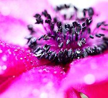 Pink Anemone... (II) by Bob Daalder