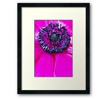 Pink Anemone... III Framed Print