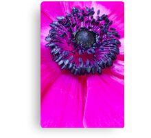 Pink Anemone... III Canvas Print