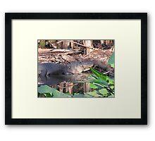 Florida 001 Framed Print