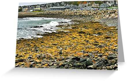 Point Porpoise, Maine by fauselr