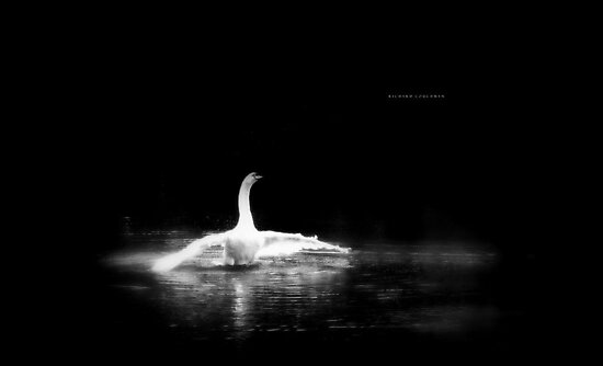 """ The Swan "" by Richard Couchman"