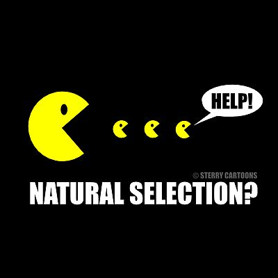 Natural Selection  by Hannah Sterry