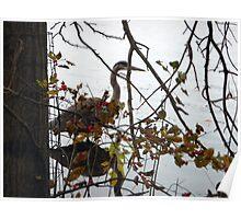 Resident heron Poster