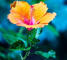 Orange flower by John Velocci