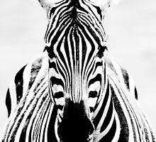 Zebra by robinrowe