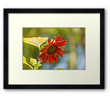 Sunflower 6 Framed Print