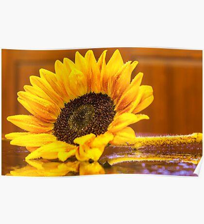 Sunflower 7 Poster