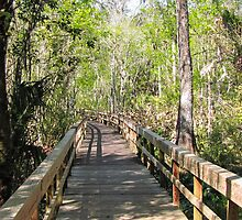 Florida 005 by Wallace Trowell