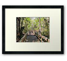 Florida 005 Framed Print