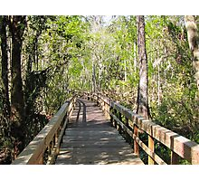 Florida 005 Photographic Print