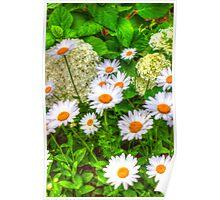 Daisy 6 Poster
