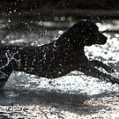 Canine Silhouette by Mark Cooper