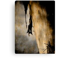 Old growth Canvas Print