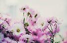 Dainty Flowers by sandra arduini
