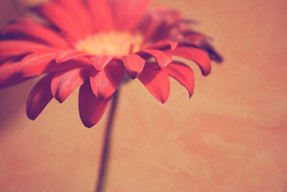 Red Daisy by sandra arduini