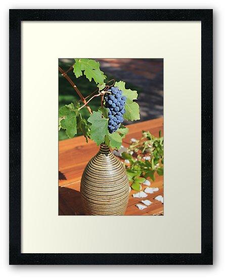 grapes by TStewey