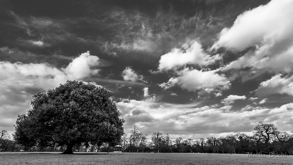 Lonely Tree by Mattia  Bicchi Photography