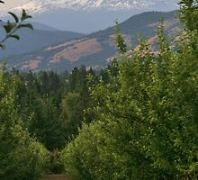 Mt Adams by Randy Richards