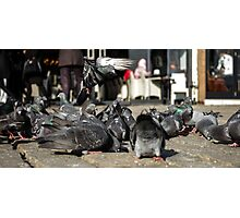 Pigeons Series Photographic Print
