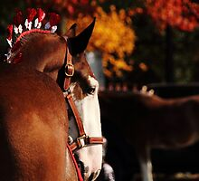 Clydesdale by ErinCrossman