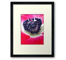 Red Anemone.... Framed Print