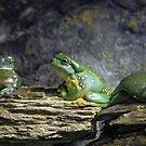 Green Tree Frog by Bevlea Ross