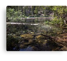 Sunken Timber Lake Canvas Print