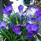 purple flowers by kimmcgauley