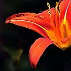 Artistic Elegant Orange Daylily Flower by MissDawnM