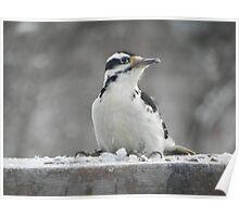 Winter Feeding Poster