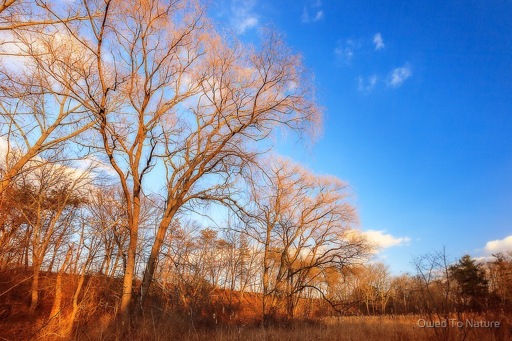 Winter blues before the storm by Owed To Nature