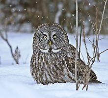 Winter wonderland by Heather King