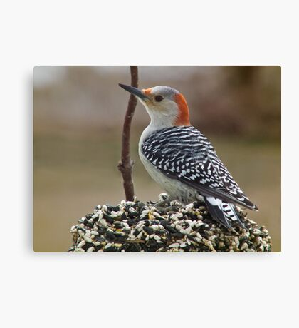 Woodpecker On Seed Cake Canvas Print