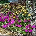 Flower array by Bill Gorman
