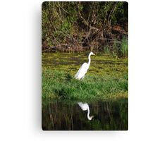 EGRET HUNTING FOR SUPPER Canvas Print