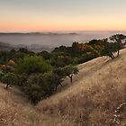 Russian Ridge in Summer by Matt Tilghman