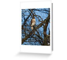 The Bird Of Prey Greeting Card