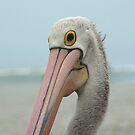 Pelican Portrait by Antonia  Valentine