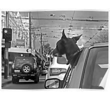 Afternoon traffic reports on WOOF- FM.  Poster