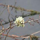 Lakes: Moss and twigs by Jonesyinc