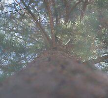 The pine scented suburb by peterhau