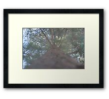 The pine scented suburb Framed Print