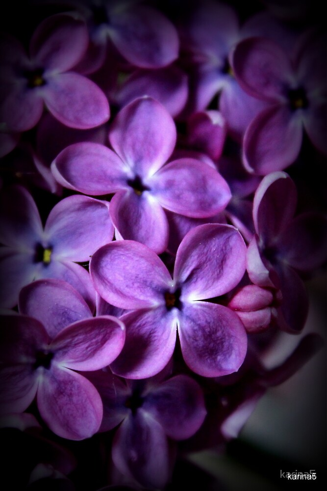 Lilac Scent  by karina5