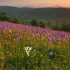 bluebells rare white in the black mountains brecon beacons  by blakmountphoto